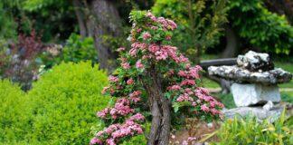 drzewko w malym ogrodzie