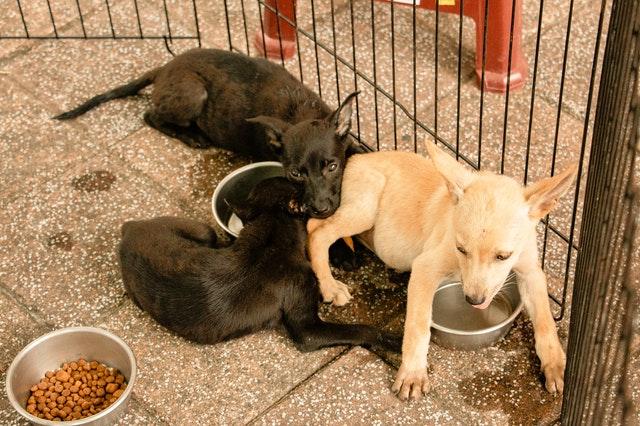 Dlaczego warto sięgnąć po karmy bezzbożowe dla psów